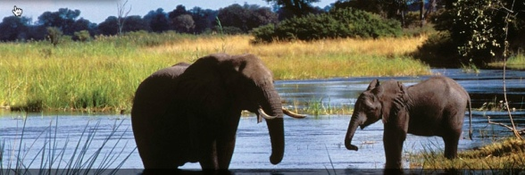 elephants caprivi 1
