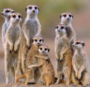 meerkat3 raptorfoundation co uk